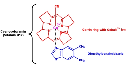 The complex structure of Vitamin B12 is based on a corrin ring with cobalt, which gives the vitamin a dark red, cherry color. From MikeBlaber.org