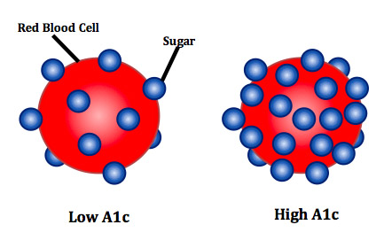 Red blood cells are coated in sugar proportionate to the amount of glucose floating in the blood stream. In the setting of insulin resistance, sugar is not imported into cells but rather remains in the blood, thereby elevating blood sugar.