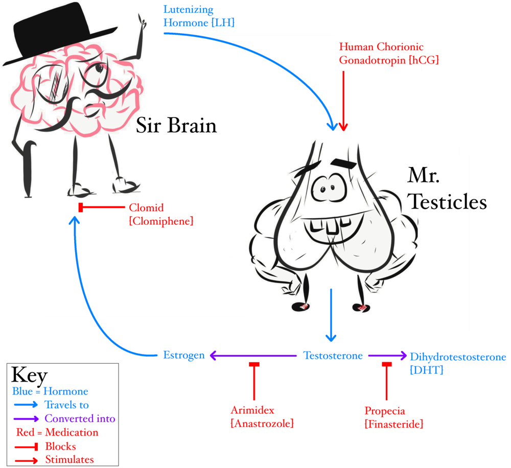 Sir Brain & Mr Testicles Convo.png