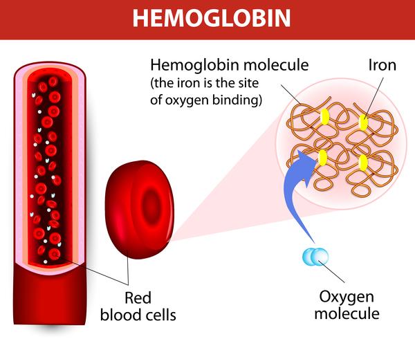 hemoglobin.jpeg
