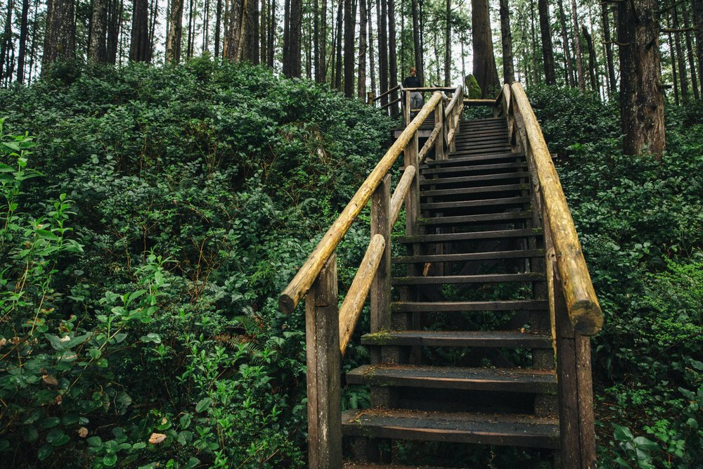 Stairs in Tonquin park