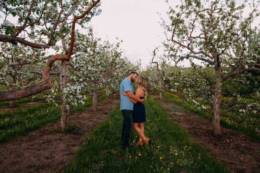 Spring Apple orchard in Kelowna