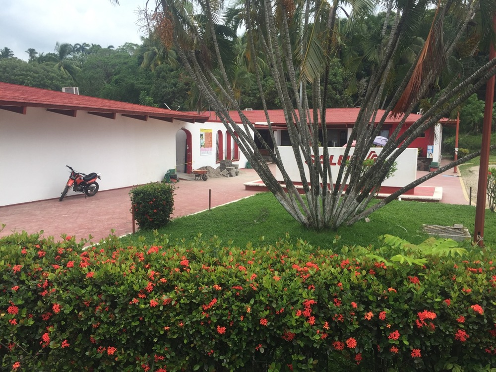 "The hospital in San Pancho is conveniently located right next to my apartment.  The sign covered by the tree with a thousand trunks says ""Salud"" which means ""Health."""