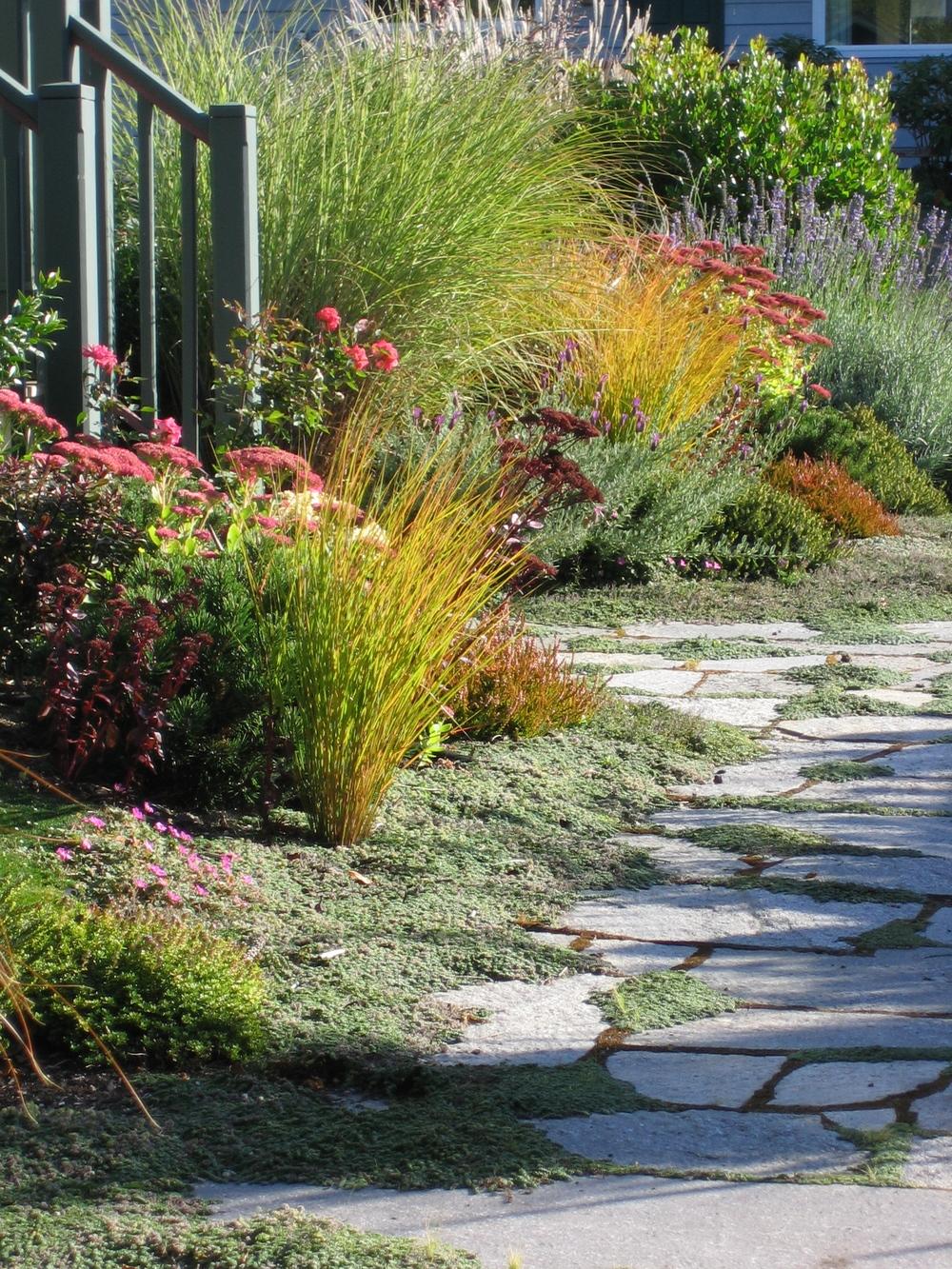 Grasses&Path.jpg