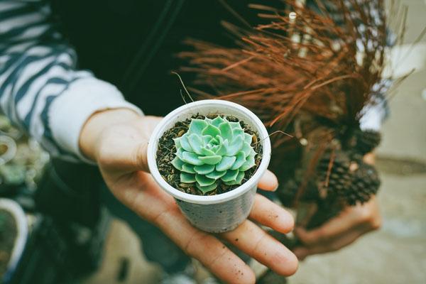 cute_plant.jpg