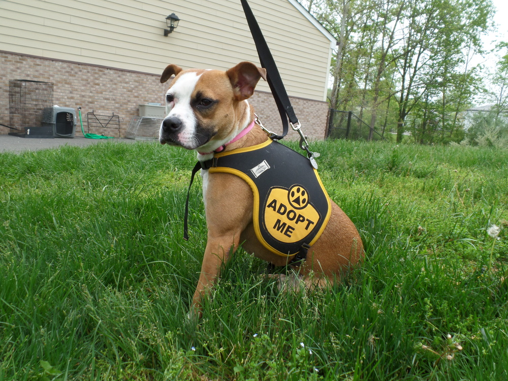 Della received a second chance, thanks to Animal Alliance in Lambertville, NJ.