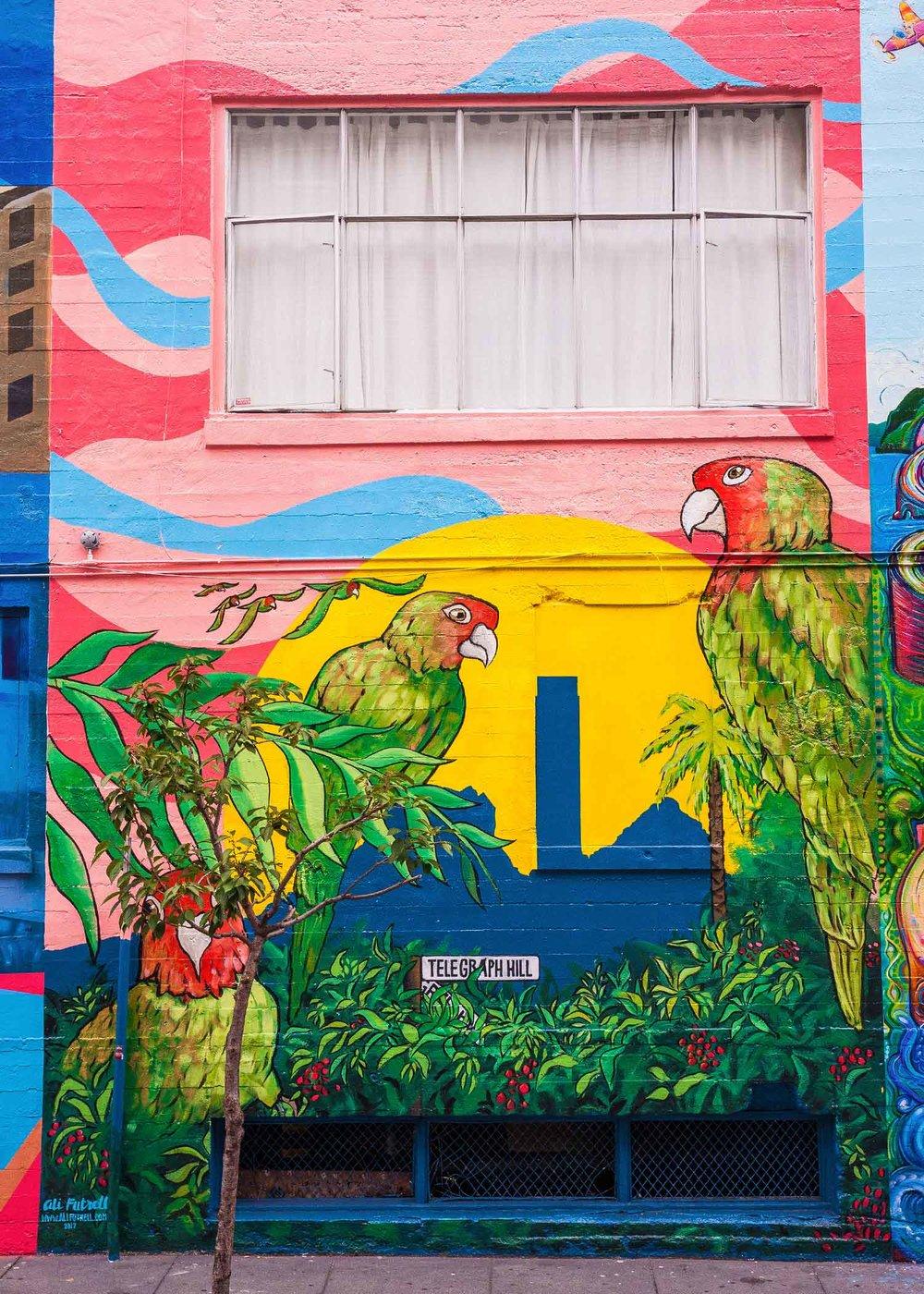 parrots_AliFutrell_artist_page.jpg