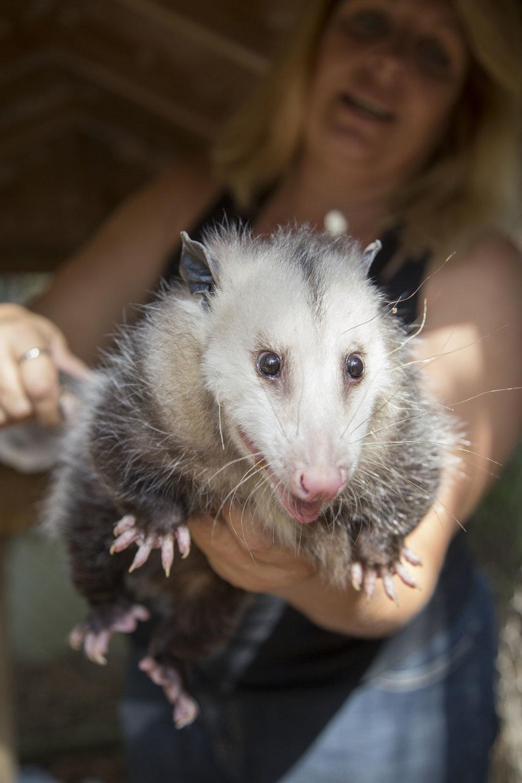 BrianneLehan_Possum.jpg