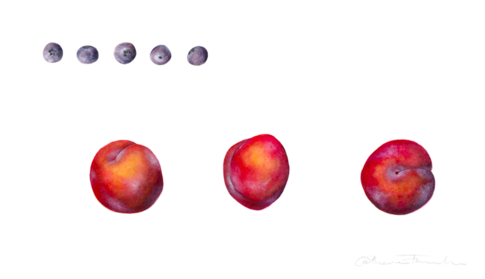 Plums and blueberries