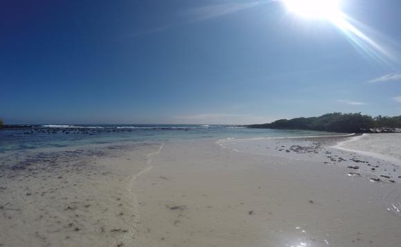 island 2.png
