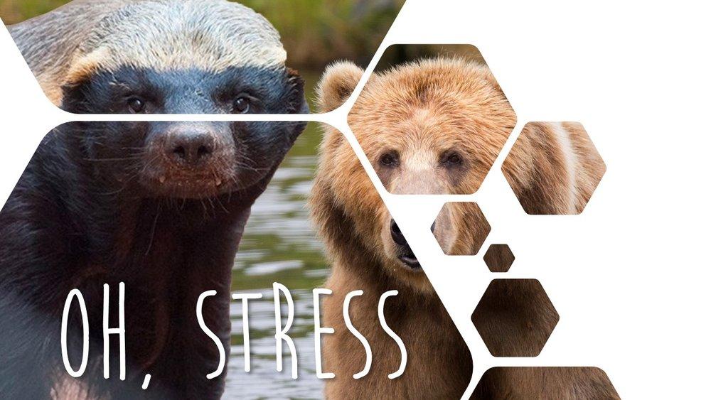 Oh, stress -