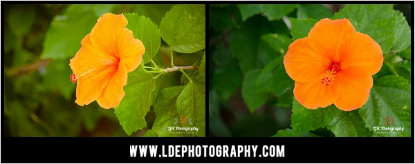 LDE Photography-2_fb