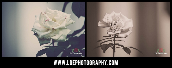 LDE Photography-5_fb