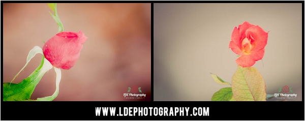 LDE Photography-7_fb