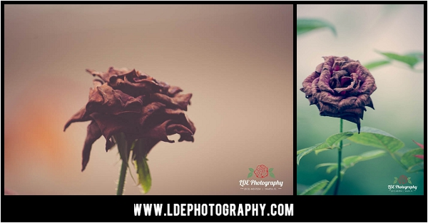 LDE Photography-18_fb