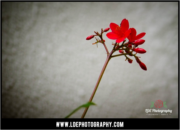 LDE Photography-23_fb