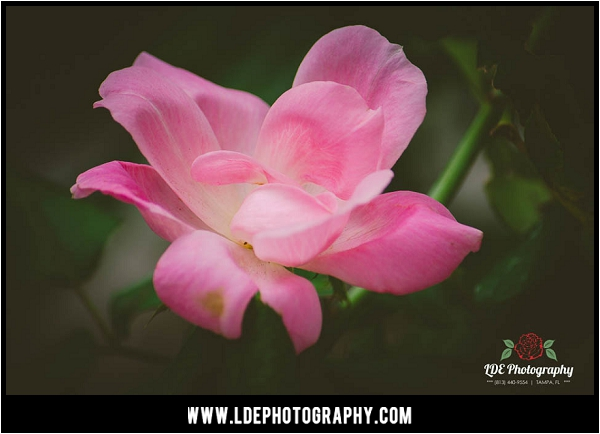 LDE Photography-26_fb