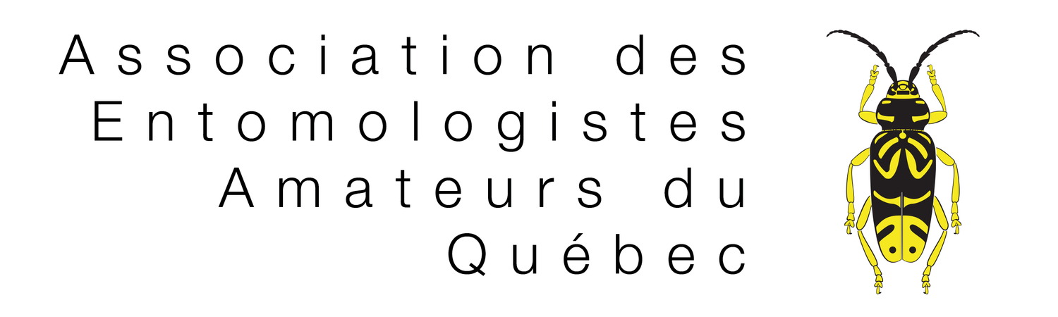 association des entomologistes amateurs du Québec