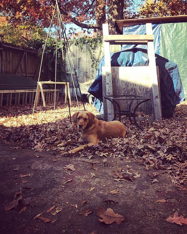 Get to work! Lazy #shopdog #shoplife #fall #dogsofinstagram #atlanta #fall