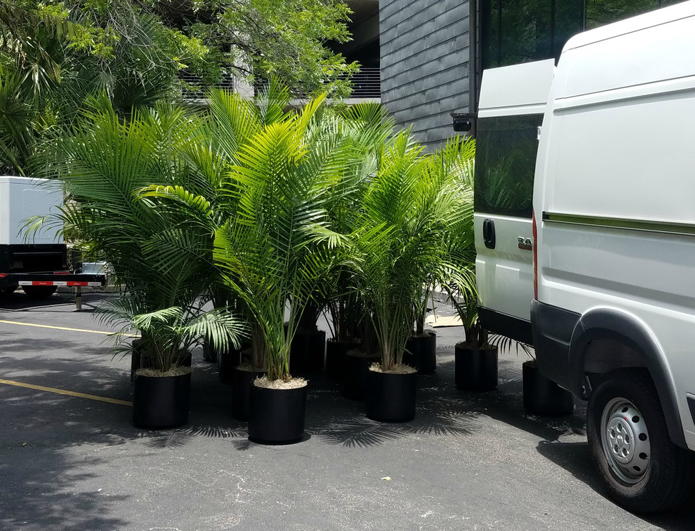 Plant Rental Houston