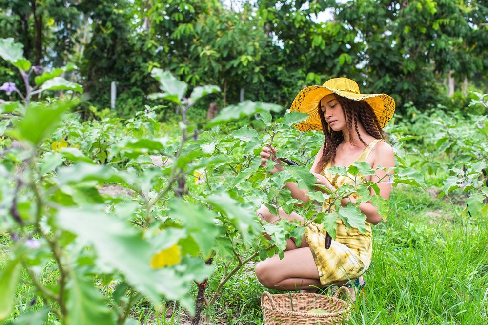 organic farm in Samui