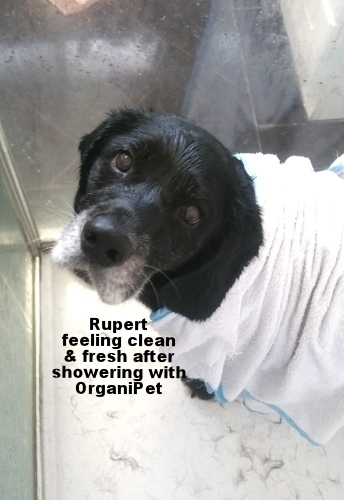 Rupert has a shower.jpg