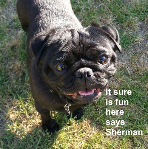 Sherman fun.jpg