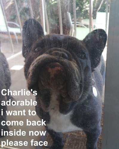 Charlie come in.jpg