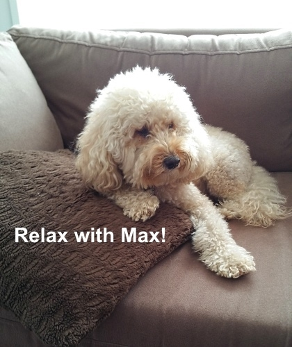 Relax with Max.jpg