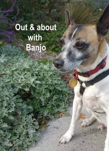 Out and About with Banjo.jpg