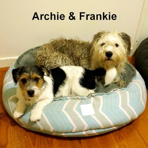 Frankie & Archie June 30th 2016 (6)-001.JPG