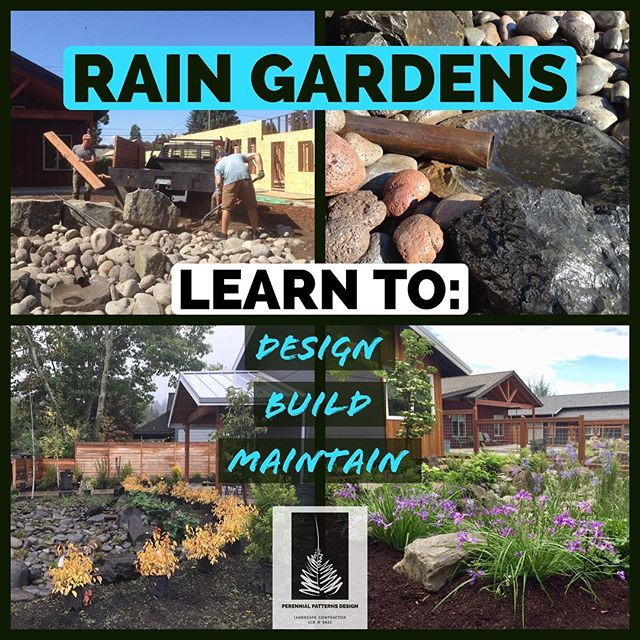 Learn to Design, Build, and Maintain your own 🌧 Rain Garden! 🌧  I've just finished putting together a new online course 🖥 that shows you how to capture the rainwater from your gutters and put it to use in your garden. 🌻🌻🌻 This course will earn you Continuing Education Units (8 CEU Credits). See Website for more Details https://www.perennialpatterns.design/rain-gardens-design-build-maintain  #raingarden #rain #landscapedesign #designbuild #onlineeducation #elearning #continuingeducation