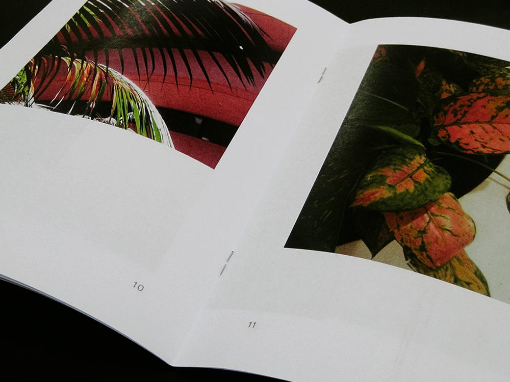 plantboyszine4.jpg