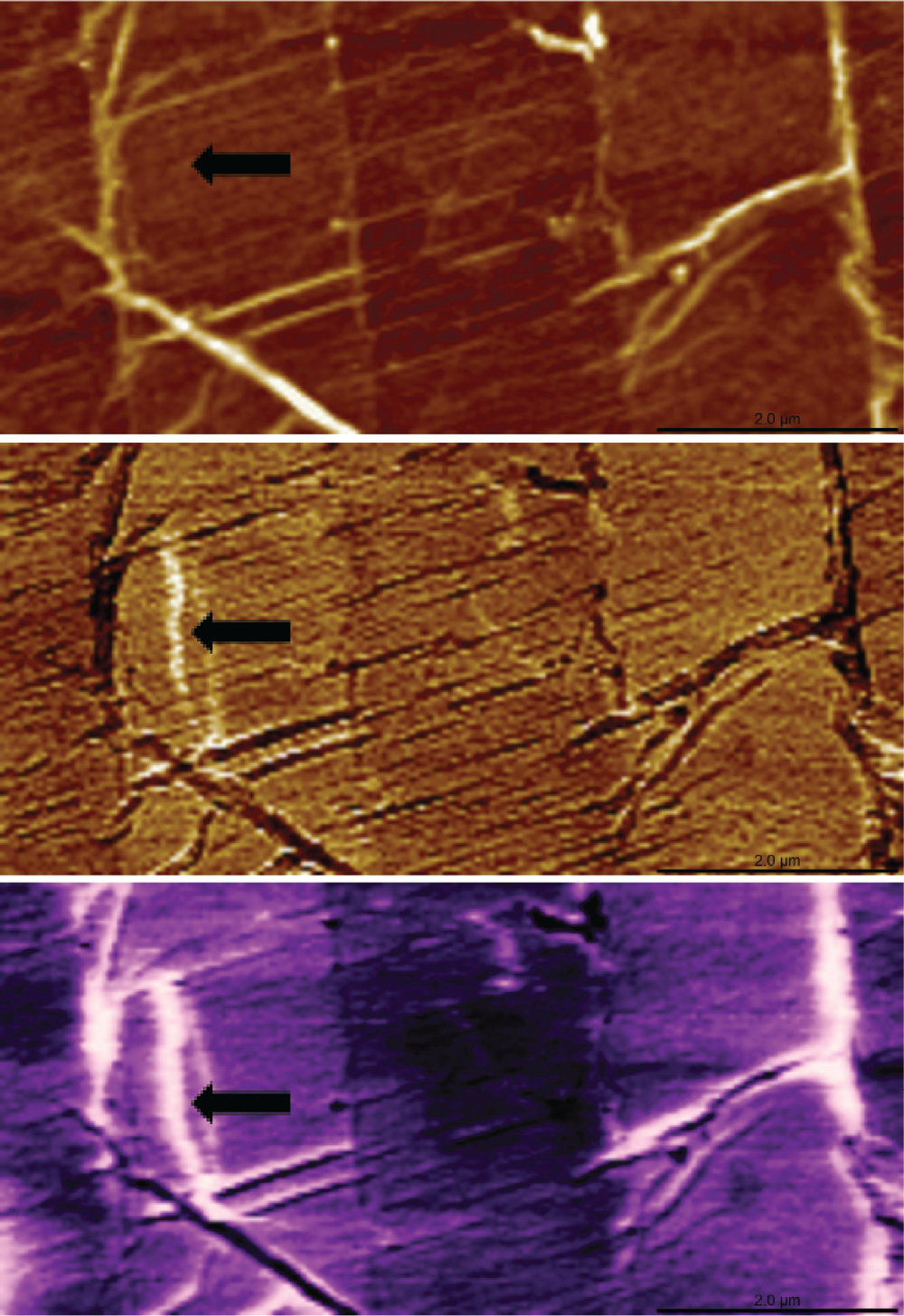 (1) 7.5 x 3.5 um PeakForce-KPFM scan (Bruker, Multimode 8) of graphene folds on a silicon substrate with Adama 80 N/m Super Sharp probe. A bright vertical band is visible in both the adhesion (Middle) and surface potential (Bottom) images but not topography (Top). The higher surface potential may be attributed to weaker bonding between the graphene and the substrate in this region. (Sample: Georg Duesberg, Trinity College Dublin).