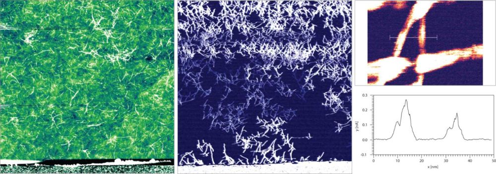 (5) 10 um PeakForce-TUNA scan (Bruker, Dimension Icon) of an array of carbon nanotubes connected to a gold electrode with an Adama AD-40-AS probe. Although the concentration of nanotubes appears to be uniform from the topography image (Left) the current image (Middle) reveals the electrical pathway through the network. Scan time = 4 Hours (3.3 Megapixels). (Upper Right) 60 x 100 nm Current image. (Bottom Right) High resolution section profile demonstrating a nanotube diamater of 8 nm collected after the larger image. (Sample: Matteo Palma, Queen Marry University London).