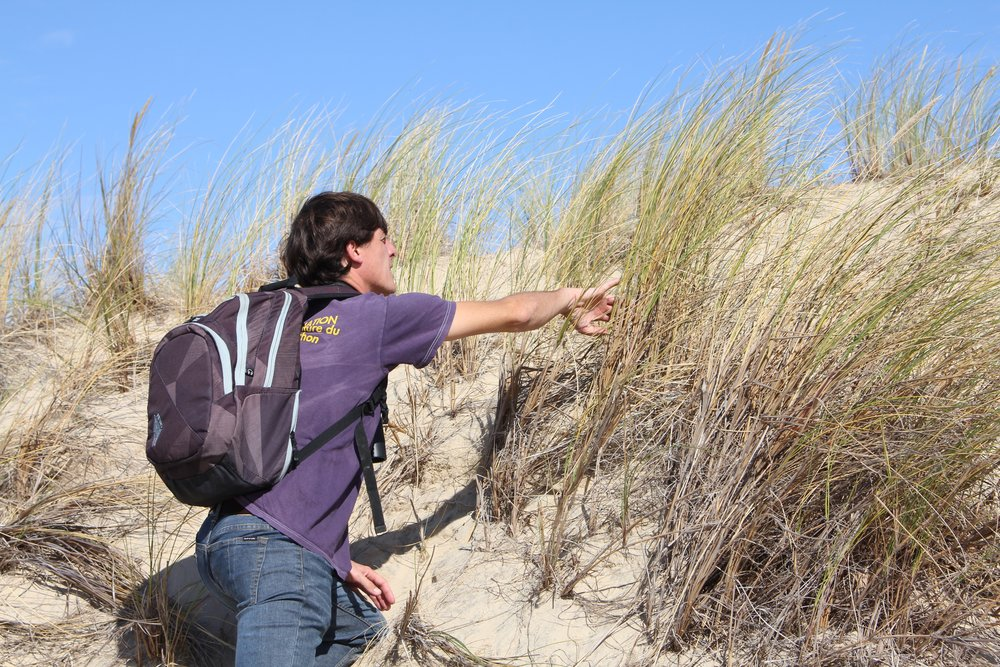 Discovering marram grass with a naturalist from the  Landes de Gascogne Regional Natural Park