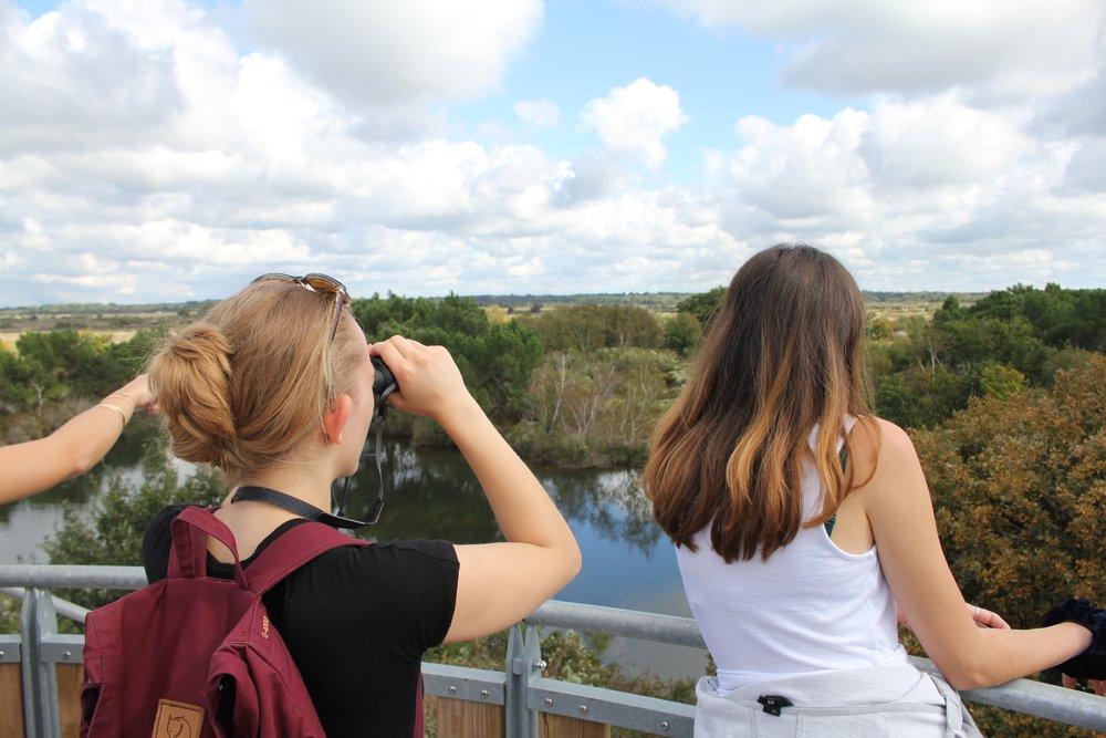 Observation des oiseaux depuis une plateforme