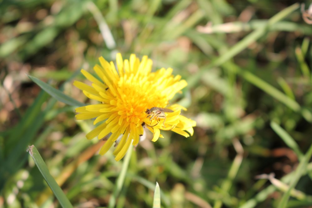 A la poursuite des insectes