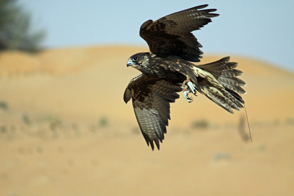 private-falconry-experience-banner.jpg
