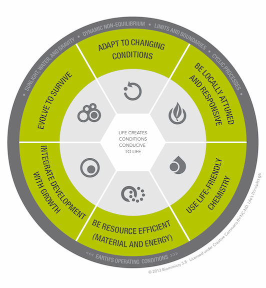 Life's Principles (framework developed by Biomimicry 3.8 and the Biomimicry Institute)