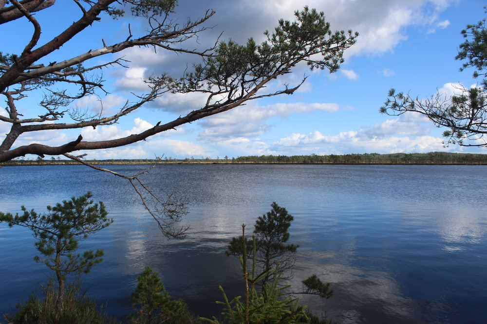Svartgölen lake is the natural habitat of many birds including cranes and the golden eagle