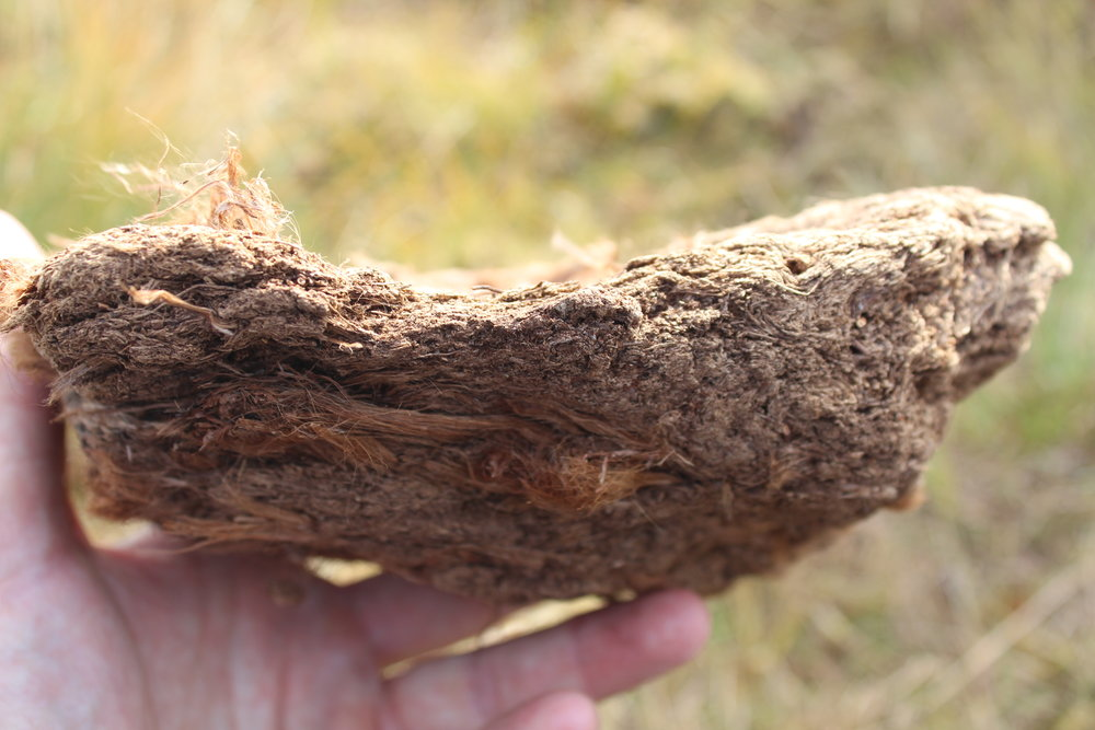 Dried peat: only one millimeter forms every year