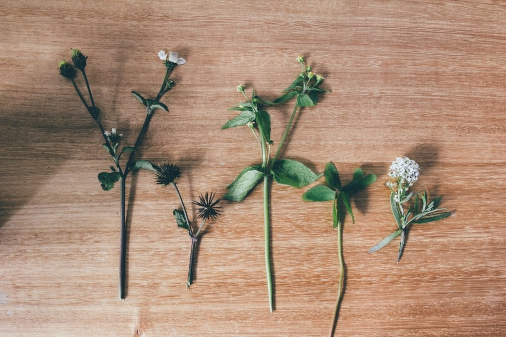 From left to right, Cobbler's Pegs, Fringed Quickweed, Wood Sorrel and Sweet Alyssum