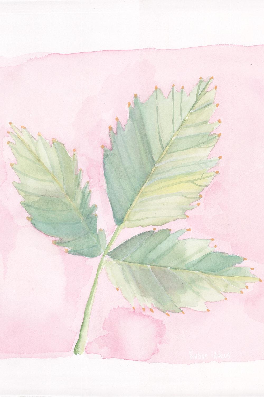 Raspberry Leaf.jpg