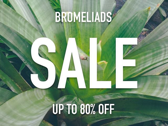 My folks over at @bromeliad_garden are having a huge sale on their range of bromeliads. Perfect for the plant obsessed among you. The bromeliads in my garden are pretty much the only thing that hasn't died as I've neglected EVERYTHING (including this Insta page 😜) after having Sagey. I love these plants so much, you treat them like dirt and they just keep on thriving! Plus they come in a huge range of colours and patterns. Did you know that pineapples are from the bromeliad family and contain bromelain, a powerful anti-inflammatory and antihistamine. It's saved me a few times. Love them 🌿
