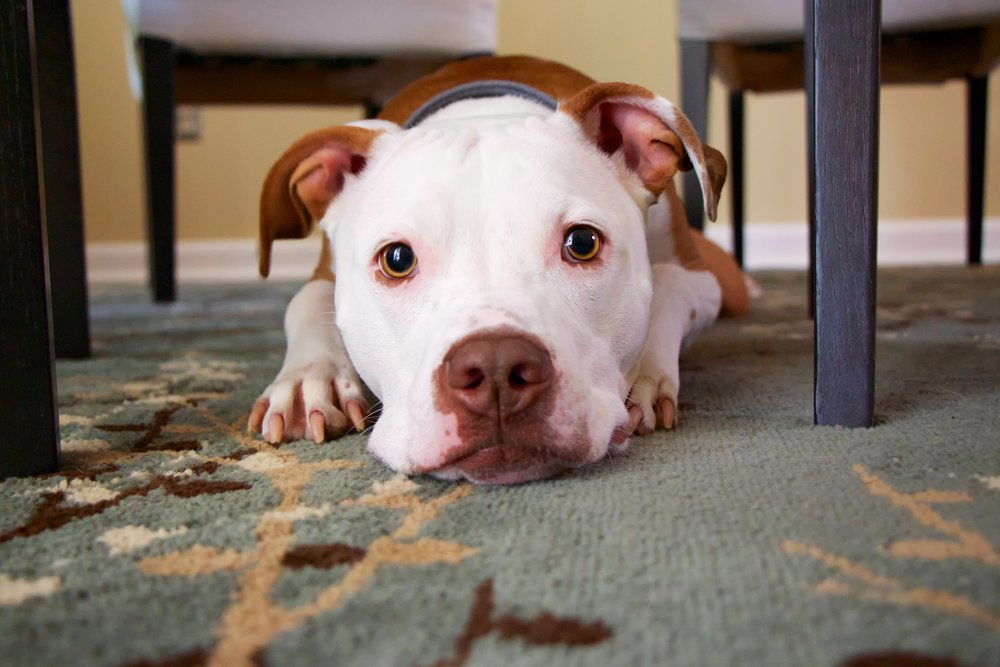 dog on restaurant floor
