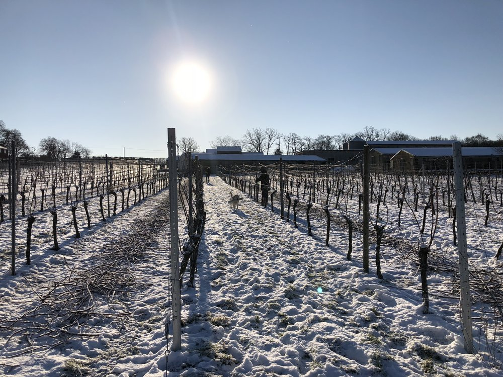 Snow day at the Vineyard