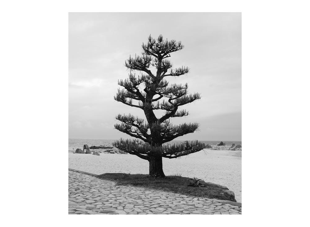 Sumimasen-Dan-Wilton-3.jpg