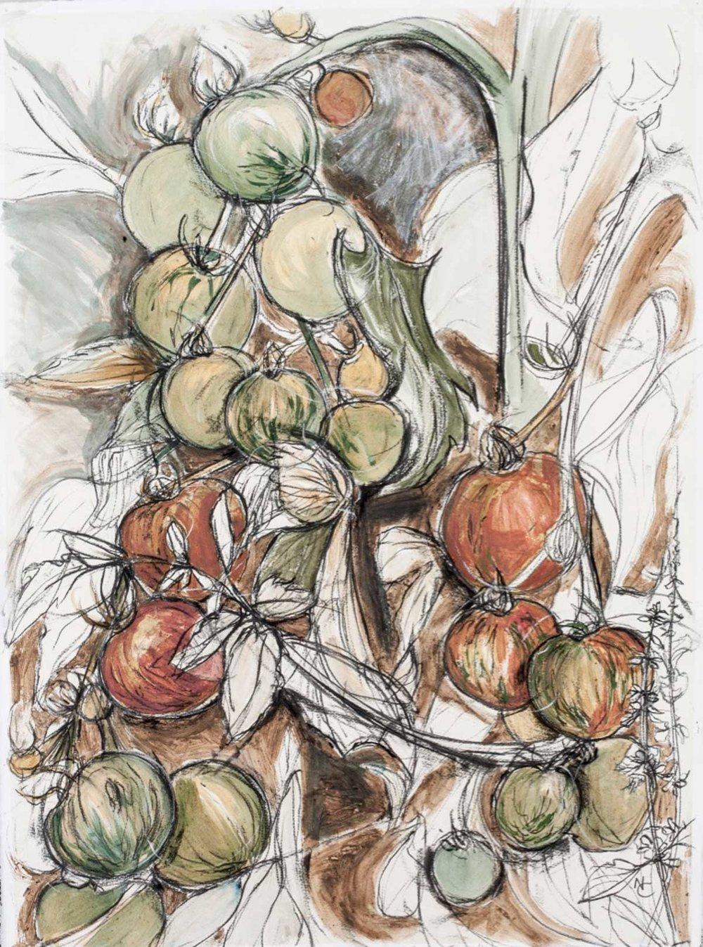natasha-clutterbuck-tigerella-tomatoes.jpg