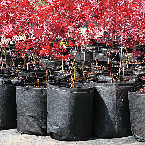 Root Pouch degradable pots can give your seedlings more time to grow before planting - and the pot can be planted right into the ground!